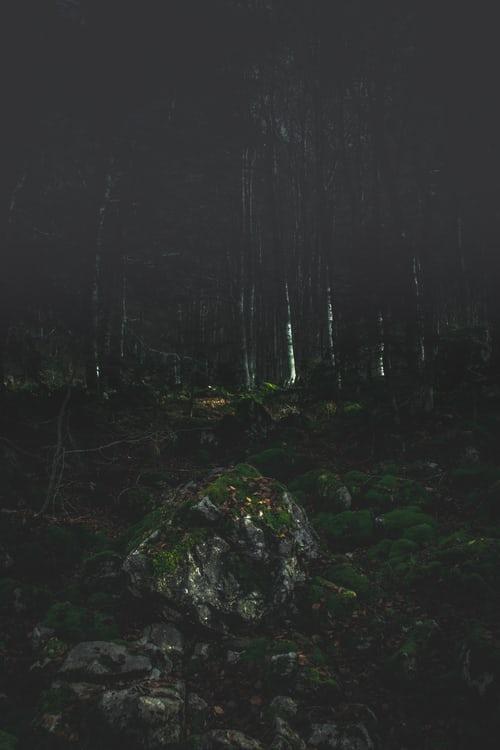 Forest - Harry Potter Car